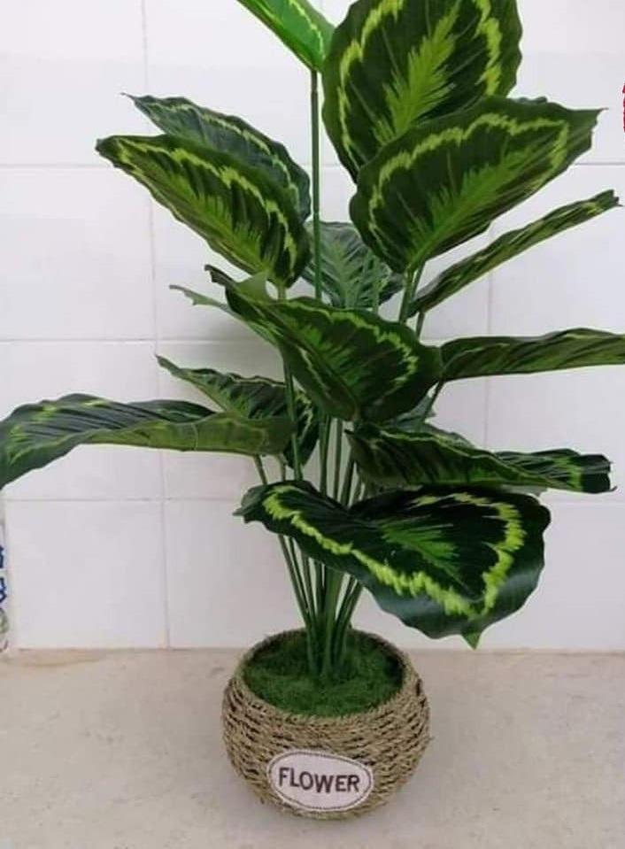 Plante-artificielle-PL1-tunisie