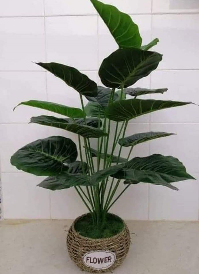Plante-artificielle-PL4-tunisie